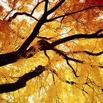 In the Spirit of Healing - Fall Leaves on Tree